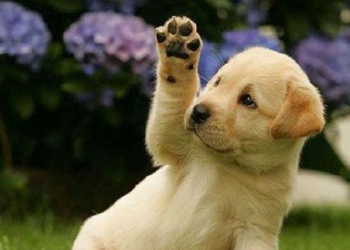 bye waving