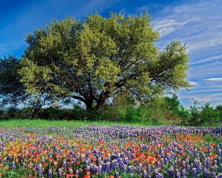 Beautiful nature scenery wallpaper pictures 4