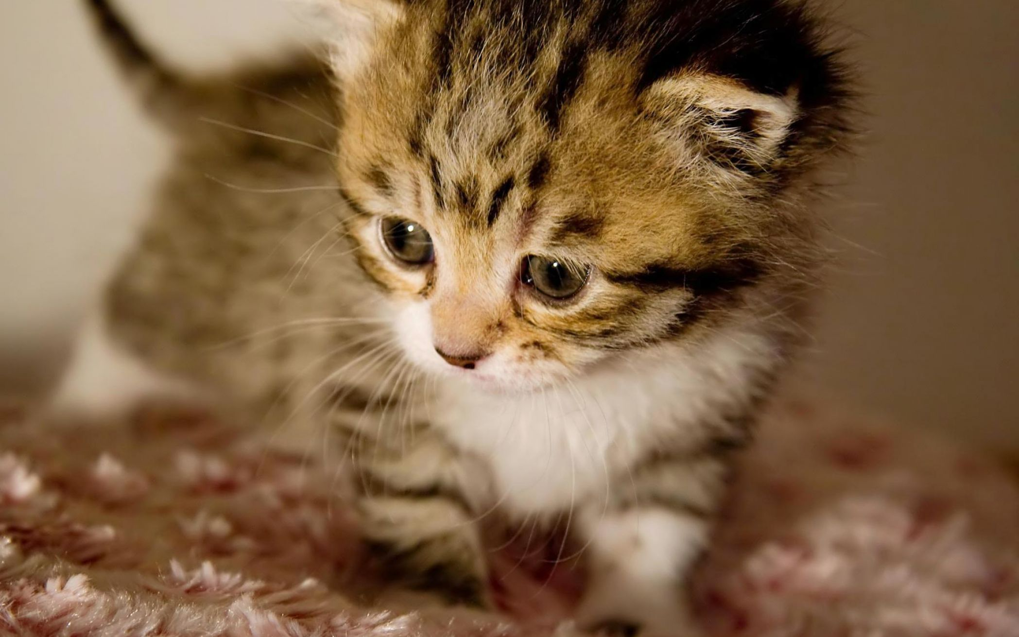 Cute baby kittens wallpapers pictures 2