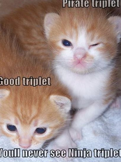 funny puppies and kittens - photo #10