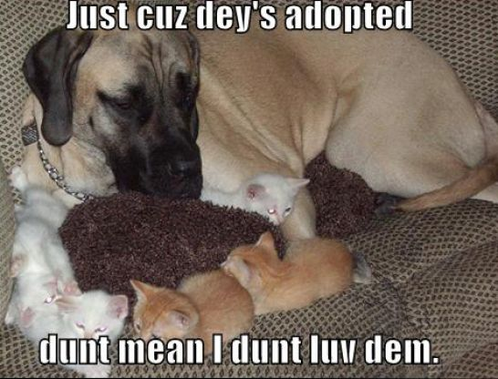 Funny Pictures Puppies And Kittens