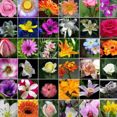 список всех растений мира по алфавиту продаже