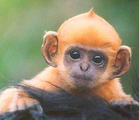 Really cute monkeys pictures - photo#5