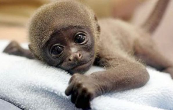 Really cute monkeys pictures - photo#11